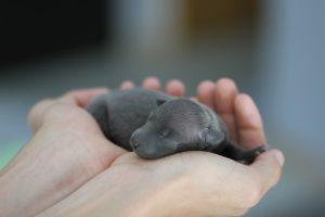 Faza neonatalna szczeniaka